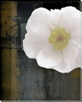 White Peony Flower on Dark Abstract Wrapped Canvas Giclee Print