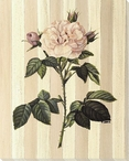 White Rose Flower Wrapped Canvas Giclee Print Wall Art