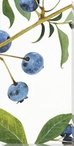 Wild Blueberries III Wrapped Canvas Giclee Print Wall Art
