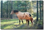 Wilderness Bond Horses Wrapped Canvas Giclee Print Wall Art