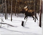 Winter Forage Moose Wrapped Canvas Giclee Print Wall Art