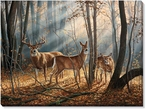 Woodland Splendor Whitetail Deer Wrapped Canvas Giclee Print