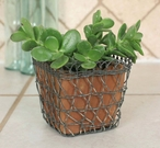 Woven Wire Square Basket with Terra Cotta Pot