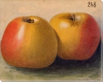 Yellow Apples No. 248 Wrapped Canvas Giclee Print Wall Art