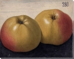 Yellow Apples No. 280 Wrapped Canvas Giclee Print Wall Art