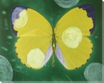 Yellow Butterfly Study Wrapped Canvas Giclee Print Wall Art