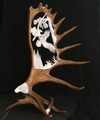 Antler Carvings