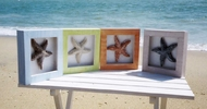 4 Starfish Shadowbox Pictures out of stock