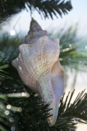 Seashell Ornament Fox Shell