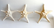 Set of 3 Knobby Starfish