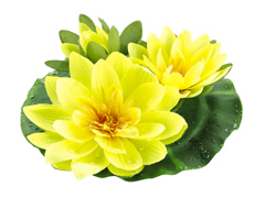 1/2 Dozen (6) - 9 inch Artificial Floating Lotus With Waterdrop 2 Flowers & 1 Bud in Yellow