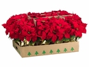 """1 Dozen - 15"""" Artificial Poinsettias Plant in Gold Wrapped Pot (shown in Red)"""