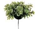 "1 Dozen - 3"" Sedum Artificial Succulent Picks"