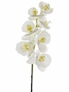 "1 dozen - 40"" Phalaenopsis Orchid Stems - High Quality (Shown in Lavendar/Orchid)"