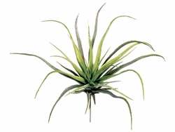 "12.5"" Medium Tillandsia Plant"