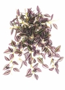 """14.9"""" Artificial Mini Wandering Jew Hanging Bush with 234 Leaves - Set of 12"""
