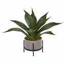 14� Agave Succulent in Decorative Planter -