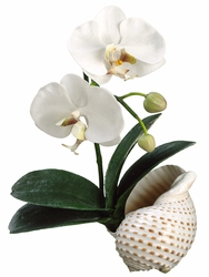 "14"" Artificial Phalaenopsis Orchid Plant in Shell Container - Set of 4"