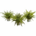 "14"" Assorted Ferns with Planter Artificial Plant (Set of 3)"