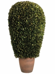 "14""Dx30""H Preserved Boxwood Ball Topiary in Pot"