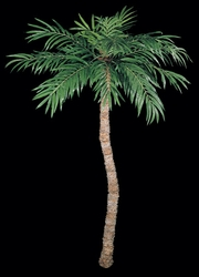 14' Large Artificial Coconut Palm Tree - Natural Trunk
