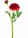 "14"" Silk Ranunculus Spray Stem with Bud - Set of 24"