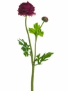18.9 inch Silk Ranunculus Flower Stem - Set of 12