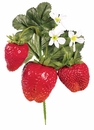 2 Dozen - Artificial Strawberry Picks
