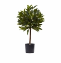 2' Sweet Bay Mini Ball Topiary