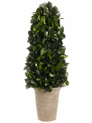 "20.8"" Preserved Tea Leaf Cone Topiary"