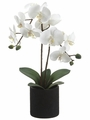 """23"""" Artificial Phalaenopsis Orchid Plant in Ceramic Pots - Set of 6"""