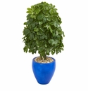 3.5� Schefflera Artificial Plant in Blue Oval Ceramic (Real Touch) -