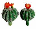 "3.75"" & 4"" Artificial Barrel Cactus Set"