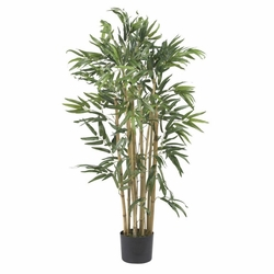 3' Multi Bambusa Bamboo Silk Tree