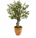 3� Olive Artificial Tree in Terracotta Planter -