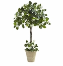 3� Stephanotis Topiary w/Planter