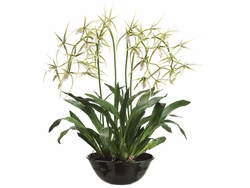 "32"" Artificial Brassia Orchid Flowering Plant in Terra Cotta Bowl"