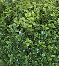"""30"""" High x 35"""" Length Outdoor Artificial Boxwood Hedge - UV Protected"""