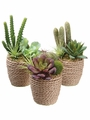 "4.5""-6.5"" Succulent Garden in Rope Container (3 ea./Set) Assorted"
