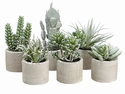"4.5"" Artificial Succulent Garden in Cement Pot Assortment - 6 in a Set as Shown"