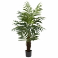 4' Areca Palm Tree