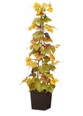 4' Artificial Grape Ivy Topiary Plant with Grapes in Wood Box - Set of 2