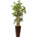 4� Bamboo in Decorative Planter