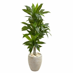 4' Dracaena Artificial Plant in Sand Colored Planter (Real Touch) -