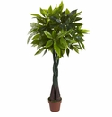 4� Money Plant (Real Touch)
