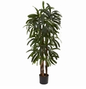 4� Raphis Palm Tree - 1 Trunks - - 196 Leaves -