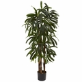 4' Raphis Palm Tree