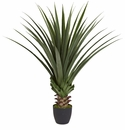 4� Spiked Agave Plant