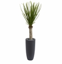 4� Yucca Tree in Gray Cylinder Planter -
