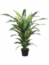"42"" Artificial Dracaena Silk Plant in Pot - Set of 2"